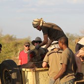 Volontariat - Protection des Animaux - Namibie