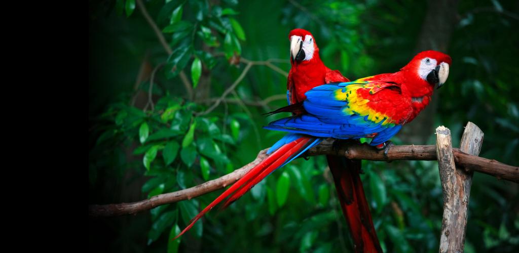 Envolez Vous Au Costa Rica Le Temps D 39 Un S Jour