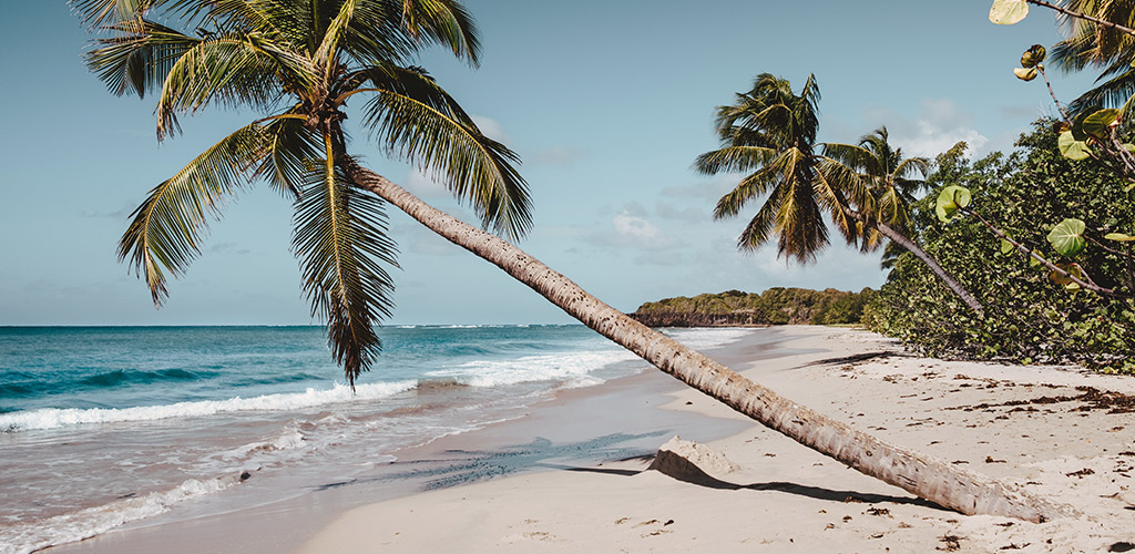 WEP Header - Martinique